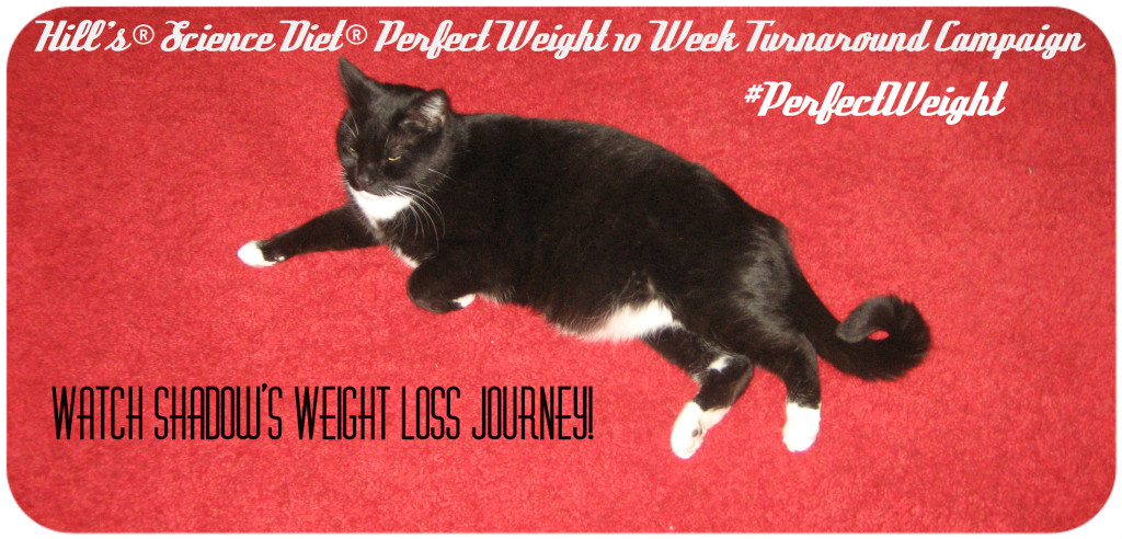 Weight loss wallpapers