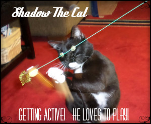 shadow Viakraft Pet Toys 1
