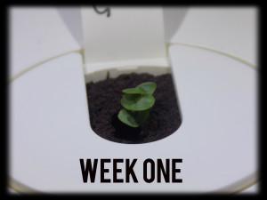 ClicknGrowweek111