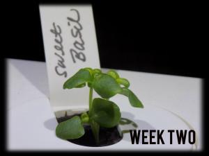 ClicknGrowweek222