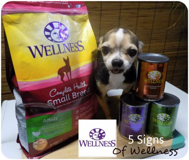 wellness1111